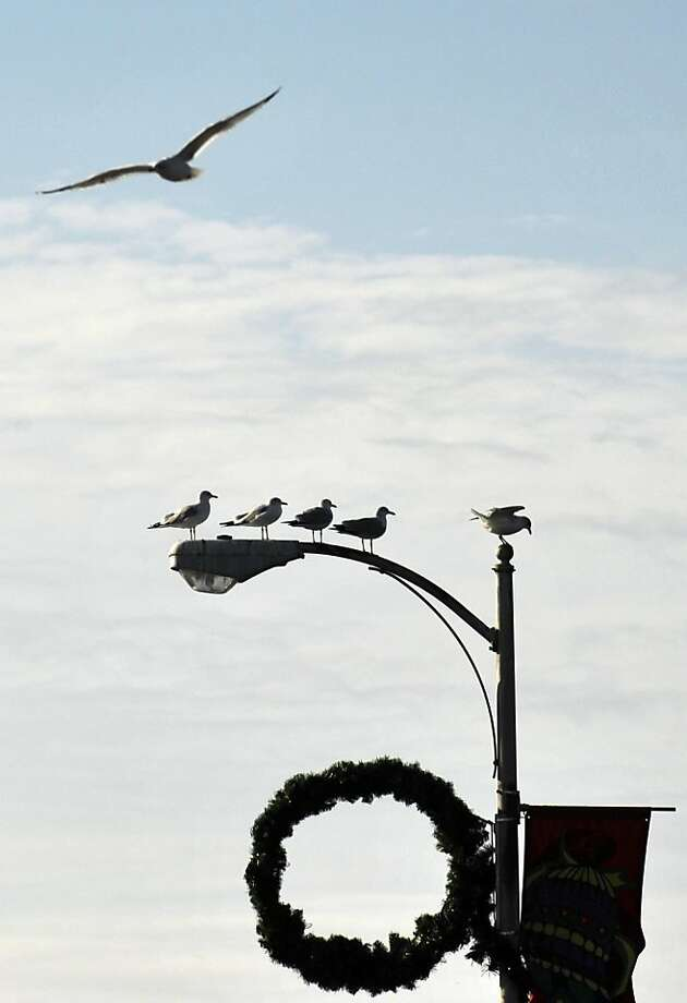 Seagulls stand perched on a street light on the 5th Street bridge as one flies away, Wednesday, Jan. 9, 2013, in downtown Augusta, Ga. Photo: Rainier Ehrhardt, Associated Press