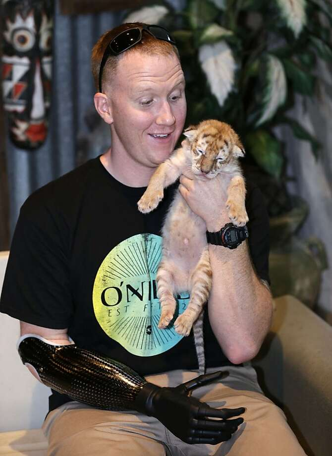 A fistful of fluff:Marine veteran James Sides, who lost an arm in Afghanistan, plays with a sleepy 6-week-old golden tabby tiger named Savion at Jungle Island in Miami. Sides and other members of the Wounded Warrior Project got a behind-the-scenes VIP tour through the interactive zoo. Photo: Wilfredo Lee, Associated Press