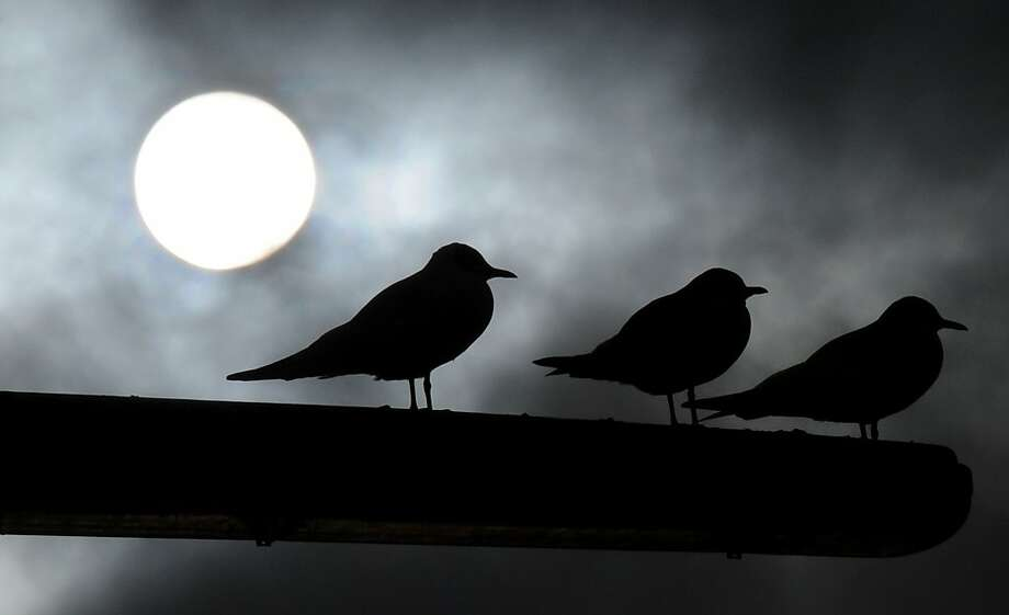 Seagulls sit on a street lantern as sun shines behind dark clouds on January 10, 2013 in Duesseldorf, western Germany. Photo: Horst Ossinger, AFP/Getty Images