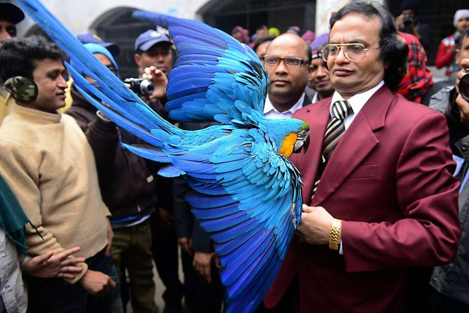 Romeo and Juliet, with feathers:Abdul Wadud holds his lovesick macaw Princess outside a court in Dhaka. The bird has refused to eat since being separated from her male partner, Prince, who was returned to his original owner, Iqram Selim, on Jan. 3. The court declined to force Selim to reunite Prince with Princess because of an ongoing dispute between the owners. The birds mated after Selim left Prince at a private zoo for safekeeping five years ago. Photo: Munir Uz Zaman, AFP/Getty Images