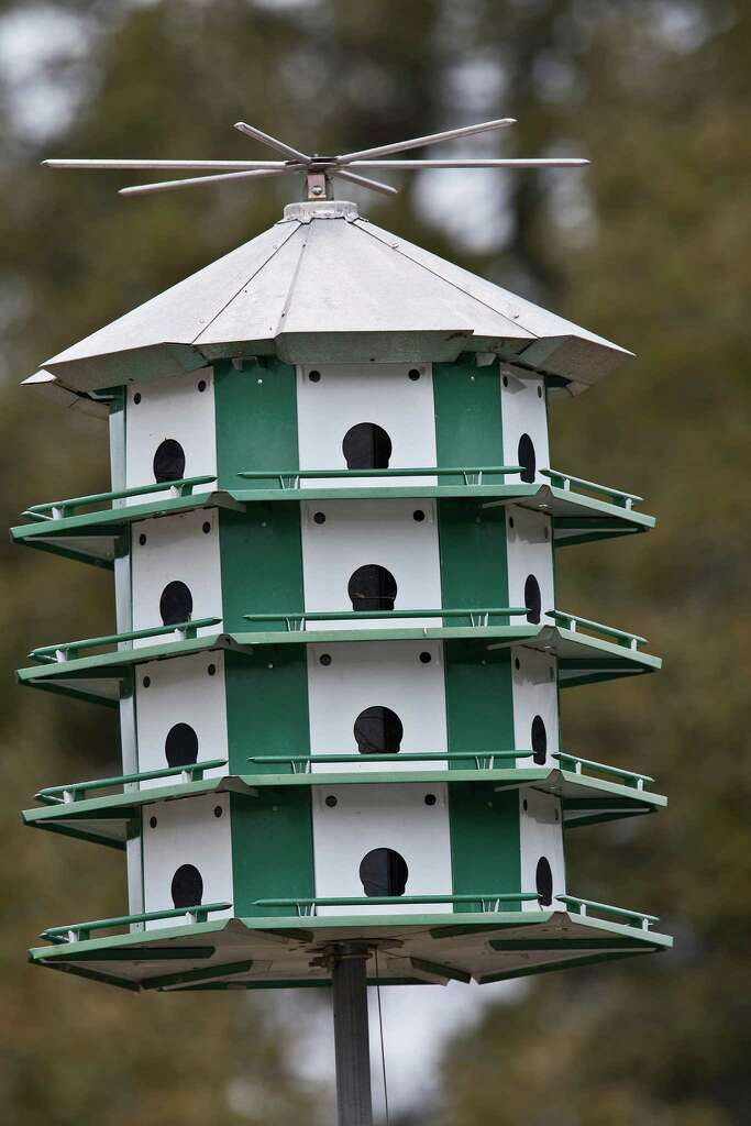 purple martins scouts will move into the area soon looking for suitable housing for the spring - Purple Martin Houses