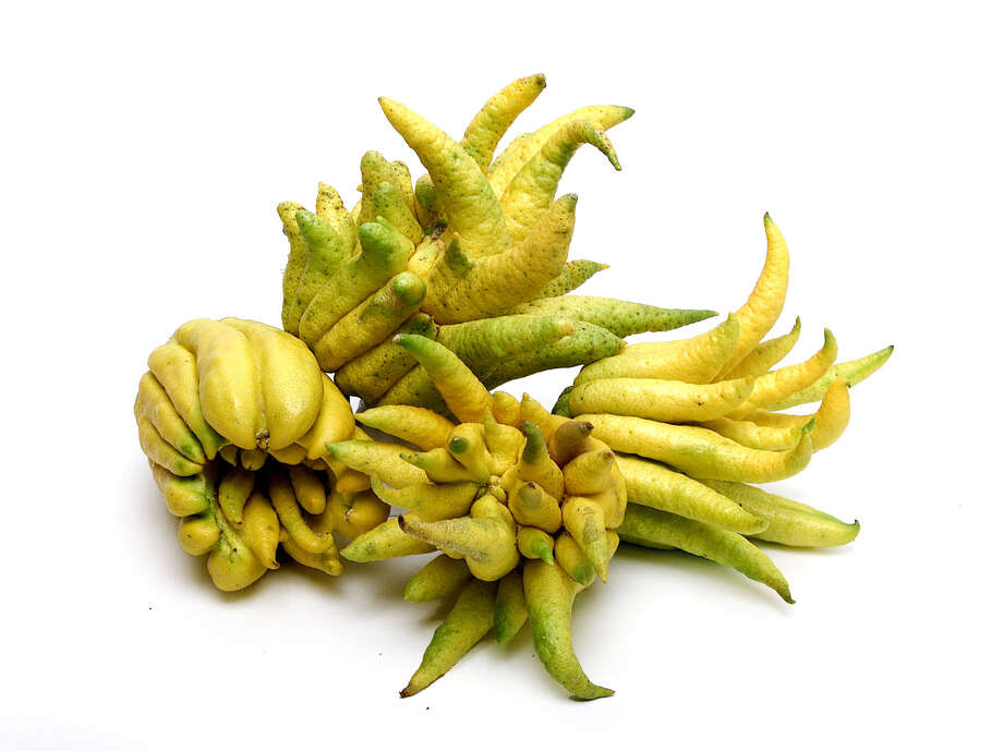 'Buddha's Hand' citron, a curiosity in the citrus world, is juiceless but is used for its zesty, tart flavor in cooking. The pleasantly scented oils are used in fragrances. / e-mail