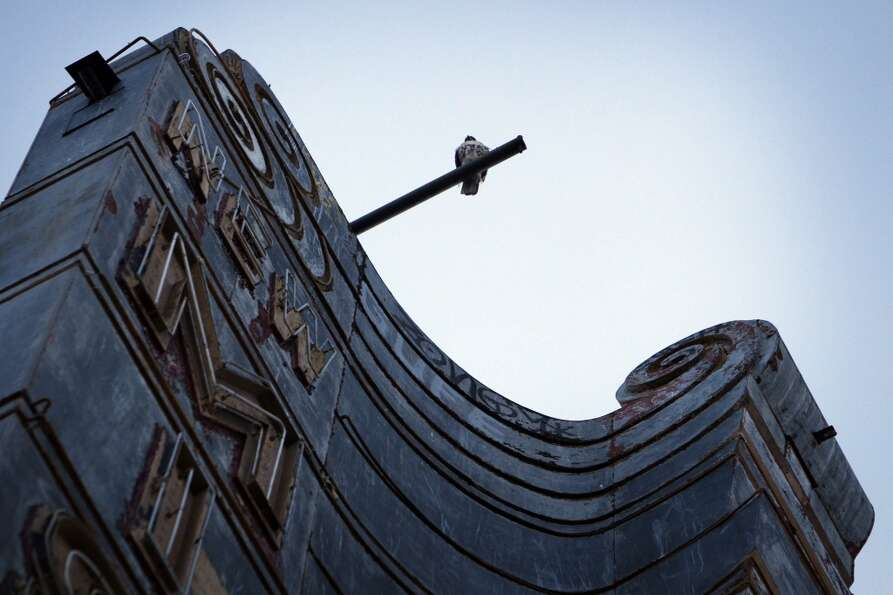A bird of prey sits atop the sign of the New Mission Theater.