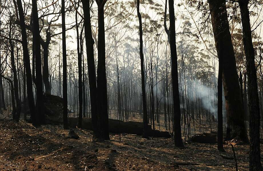Blackened trees are all that remain from the Deans Gap fire on Australia's southern coast.  Photo: Greg Wood, AFP/Getty Images
