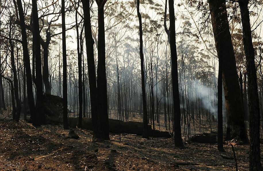 Blackened trees are all that remain from the Deans Gap fire on Australia's southern coast.