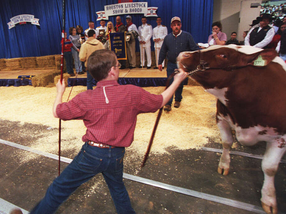 "Zane Hayes, 11, of Plainview, tries to maneuver a reluctant shorthorn steer into position for the official photograph with the winning bidders, Jim ""Mattress Mack"" McIngvale and pro wrestler Stone Cold Steve Austin on March 3, 2001. Related story Photo: John Everett, . / Houston Chronicle"
