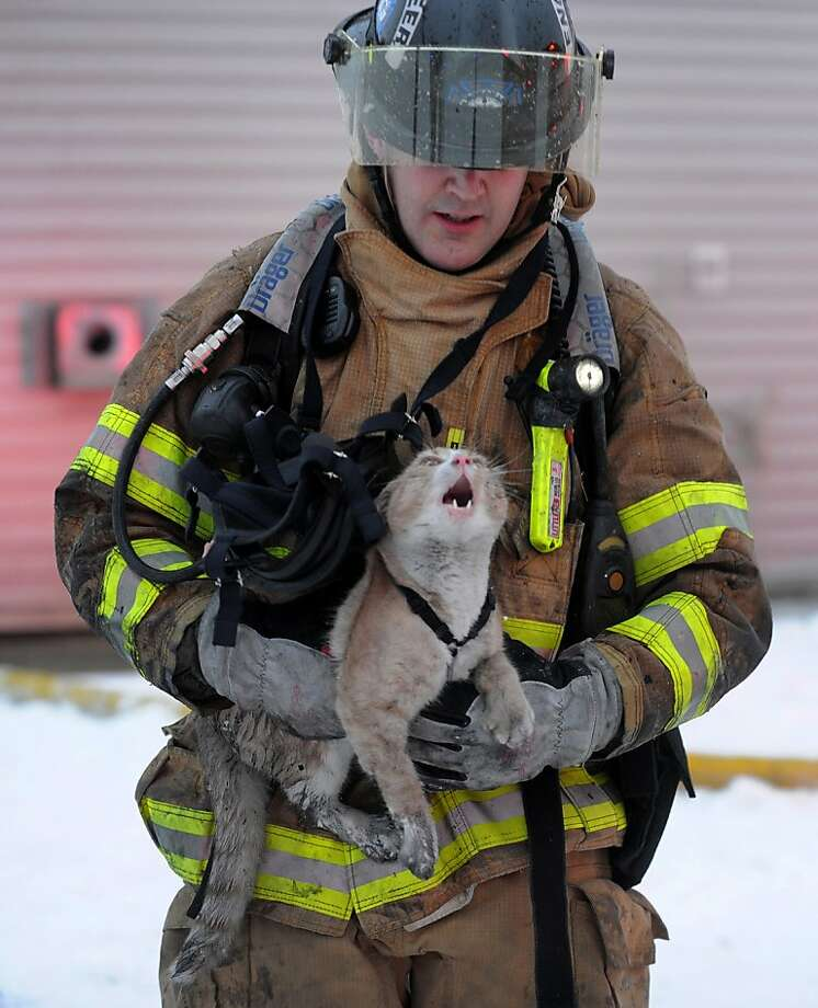 Anchorage Fire Department Engineer Pat O'Shea carries a cat that was rescued from the structure fire in a 22-unit apartment building in Government Hill on Thursday, Jan. 10, 2013.  Nobody was injured and and a dog was also rescued from the blaze that displaced 40 people. Photo: Bill Roth, Associated Press