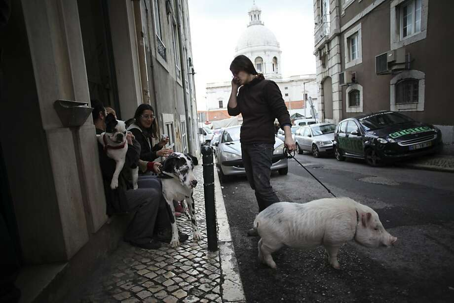 "Claudia Botas meets with friends while walking her pet pig ""Manchas"" or ""Spots"" in Lisbon's Graca neighborhood, Saturday, Jan. 12, 2013. Photo: Francisco Seco, Associated Press"