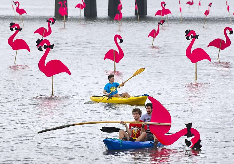 "Flamingo thieves caught pink-handed:Kayakers Joseph Pendleton (front) and Gabriel Fuselier ""liberate"" one of the plywood flamingos that were placed the previous night in Baton Rouge's City Park Lake. The traditional arrival of the flamingos heralds the city's Spanish Town Mardi Gras ball and parade. Just as traditional is the rapid disappearance of the flamingos from the lake, and their reappearance in backyards and front porches of local homes. Photo: Travis Spradling, Associated Press"