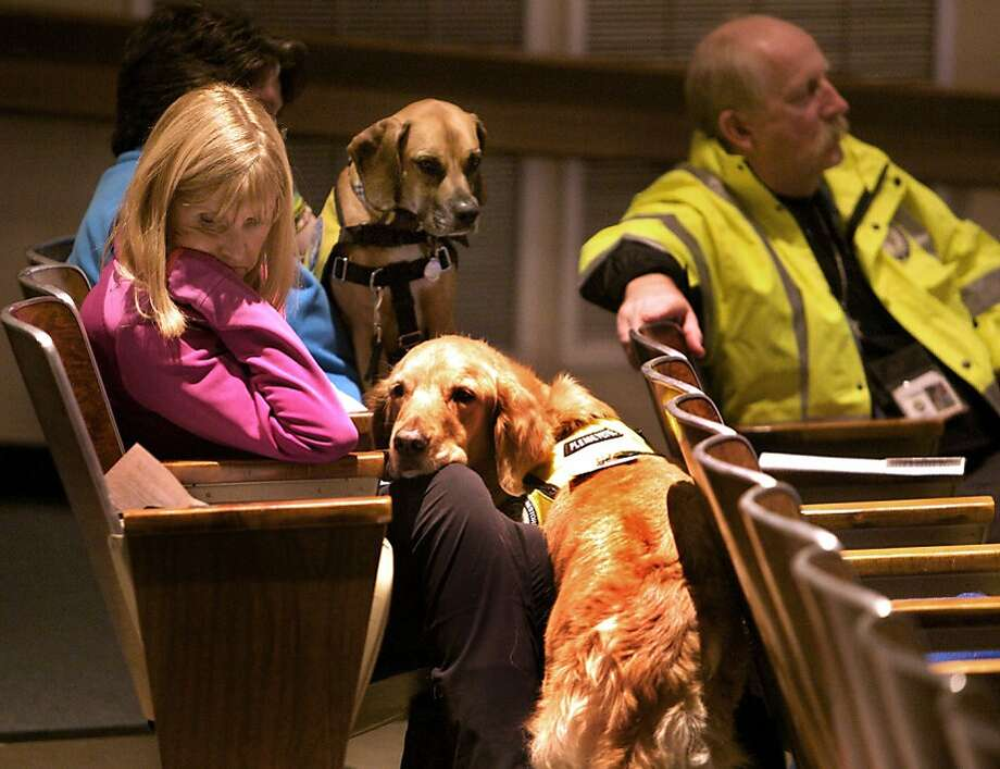 Glen Hoffman (left) of Extra Mile Ministries with K9 crisis comfort dog, Beau, attends a community meeting at Newtown High School on the fate of Sandy Hook Elementary School in Newtown, Conn., where a gunmen killed 26 people. Photo: Michelle McLoughlin, Associated Press