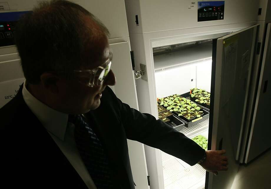 Harvey Blanch, chief science and technology officer of the Joint BioEnergy Institute, looks in on plants growing in a climate-controlled cabinet in Emeryville, Calif., on Tuesday, Dec. 2, 2008. Photo: Paul Chinn, The Chronicle