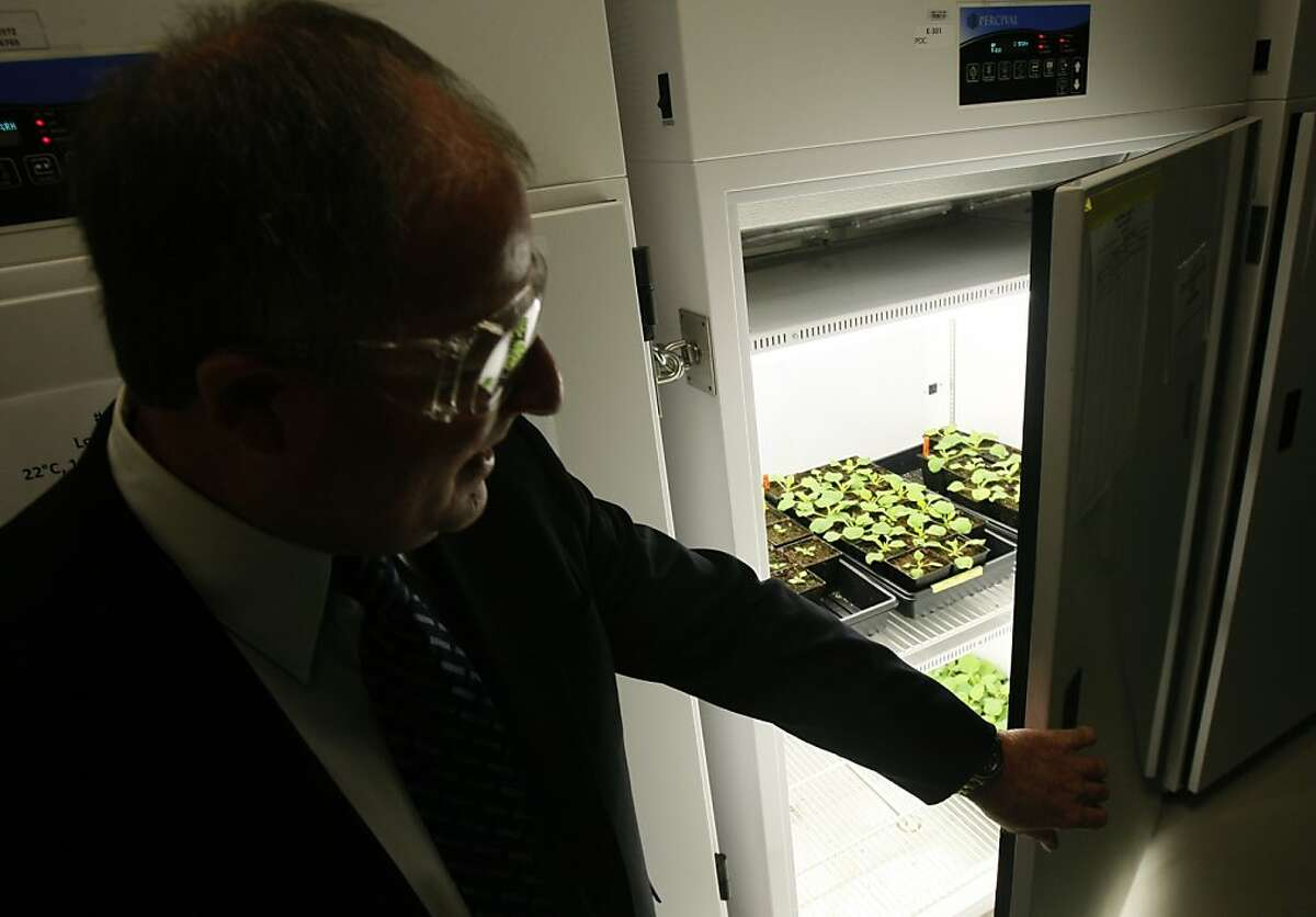 Harvey Blanch, chief science and technology officer of the Joint BioEnergy Institute, looks in on plants growing in a climate-controlled cabinet in Emeryville, Calif., on Tuesday, Dec. 2, 2008.
