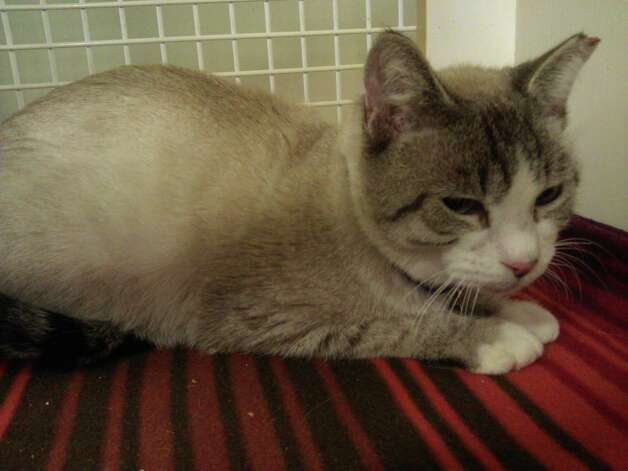 Marquize is available for adoption. Photo: Save A Stray's Life