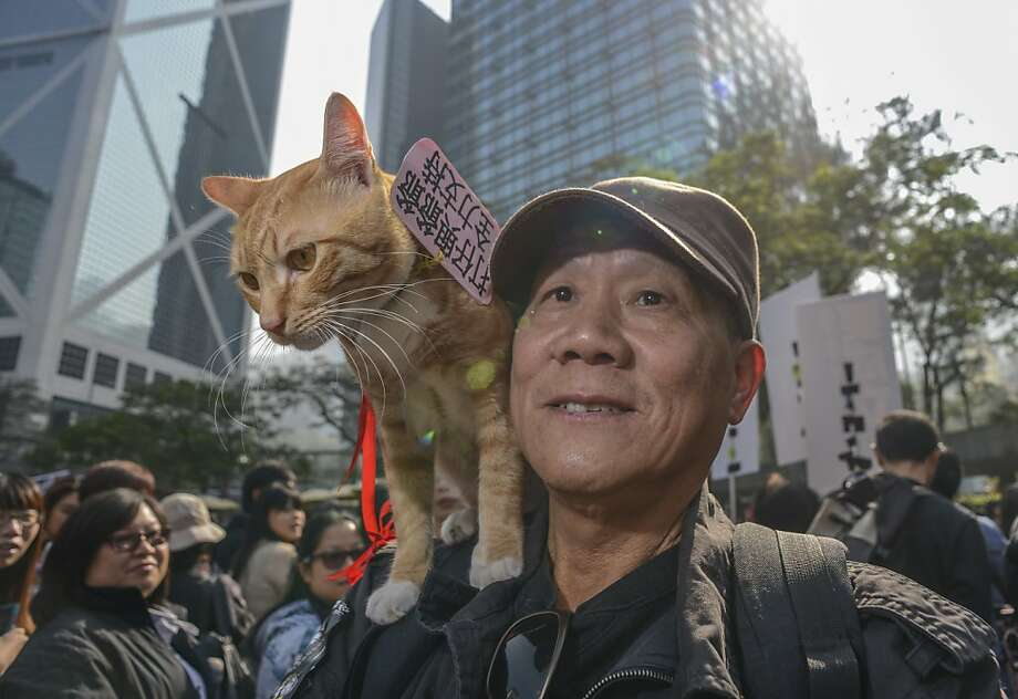 Furry flash mob: A tabby named Da Zai perches on his owner's shoulder at a pro-animal rights rally in Hong Kong that was organized on Facebook. About 1,000 people showed up, some with their pets, to rally against animal abuse. Photo: Antony Dickson, AFP/Getty Images