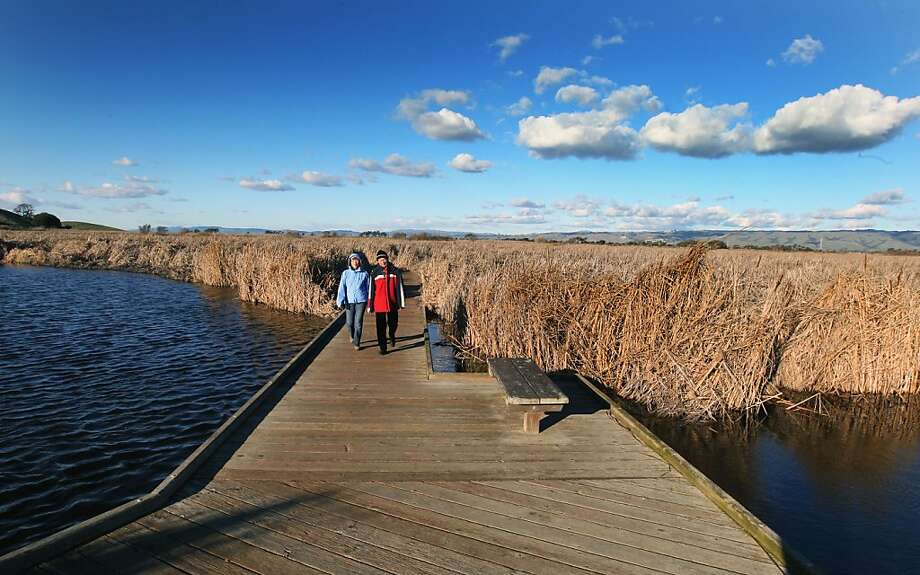 Visitors walk on one of the boardwalks through the marshes at Coyote Hills Regional Park. Photo: Lance Iversen, The Chronicle