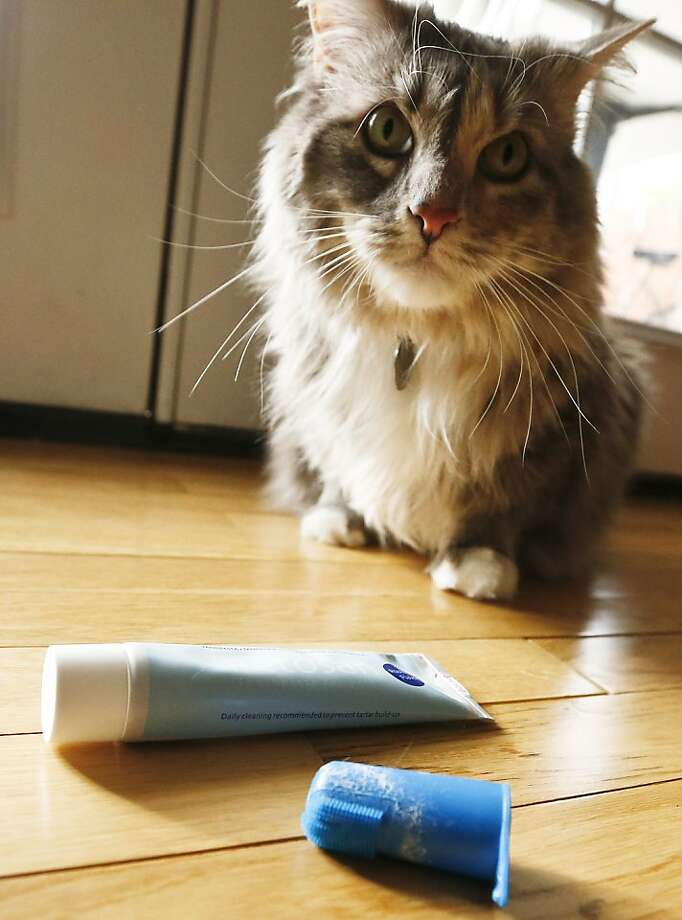 When you called me here, I assumed there would be kibble … Not some weird thimble thing and what is that, toothpaste? (The day of reckoning has arrived for Pepper, a cat with bad breath in Phoenix.) Photo: Ross Franklin, Associated Press