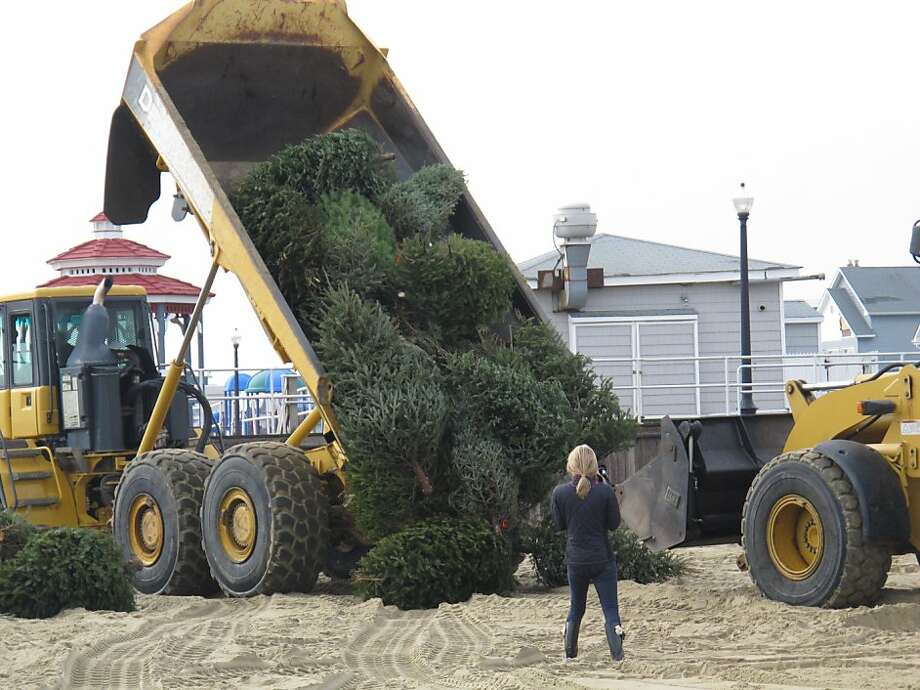 "Sprucing up after Sandy: A truck dumps discarded Christmas trees that will be used to rebuild dunes ravaged by Superstorm Sandy in Bradley Beach, N.J. Gov. Chris Christie had harsh words for oceanfront property owners along the Jersey shore who are refusing to let local governments carry out protective dune projects because the work will affect their views. He called them ""extremely selfish and short-sighted."" Photo: Wayne Parry, Associated Press"