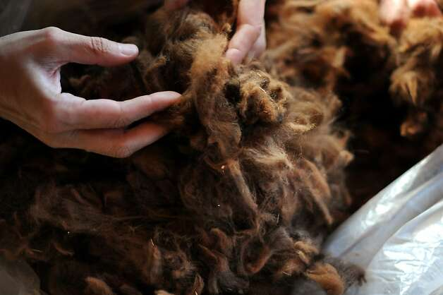 Harmeet Dhillon has begun experimenting with alpaca wool, above. Photo: Erik Castro, Special To The Chronicle