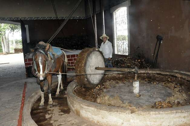 "Visitors to Valladolid's Mayapán Distillery are invited to take a tour tracing the entire production from growth and harvest of the agave to cooking, crushing (by a horse pulling a 1-ton stone around a circular ""molienda,"" or grinder), fermentation and distilling.  Photo: Christine Delsol, Special To SFGate"