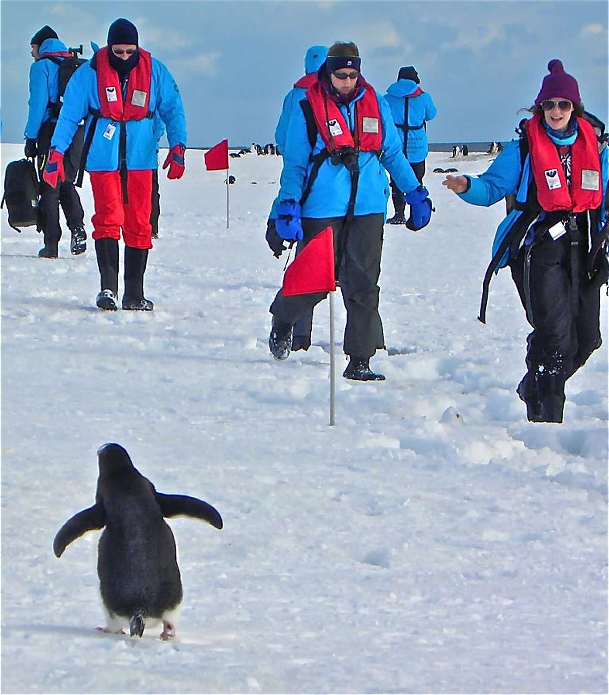 A penguin is unfazed by the visitors, who keep a modest but respectful distance.