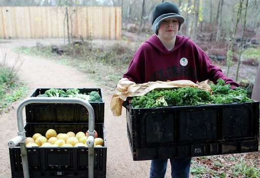 Volunteer, Ethan Haller of Kingwood, carries a box of organic kale into the Houston Arboretum & Nature Center for the weekly Rawfully Organic co-op pickup Tuesday, Jan. 15, 2013, in Houston. 