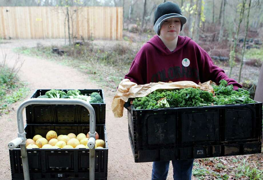 Volunteer, Ethan Haller of Kingwood, carries a box of organic kale into the Houston Arboretum & Nature Center for the weekly Rawfully Organic co-op pickup Tuesday, Jan. 15, 2013, in Houston.  There are about 7500 members in the food co-op and about 500 weekly participants. The fruit and vegetables that are provided are all organic and locally grown when possible. For more information visit www.rawfullyorganic.com. Photo: Johnny Hanson, Houston Chronicle / © 2013  Houston Chronicle