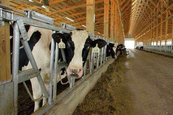 How many cows are in Canada? 