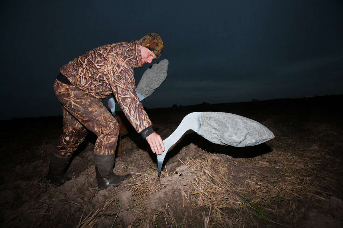 Rob Sawyer sets a sandhill crane decoy in a Matagorda County field ahead of a recent hunt in which birds taken were shared with scientists working to provide information that will improve crane management.