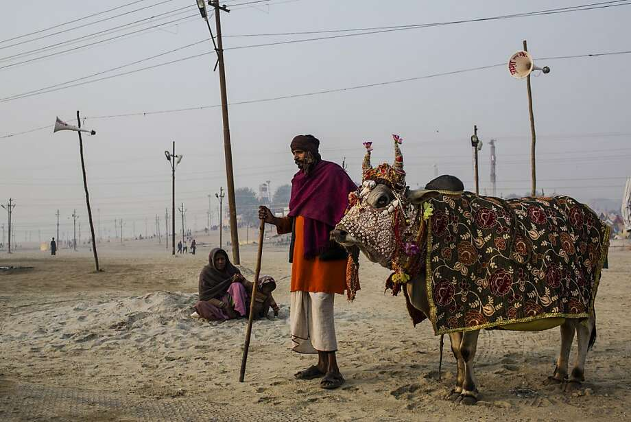 A man begs for donations as he stands with a cow on the banks of Sangam, the confluence of the holy rivers Ganges, Yamuna and the mythical Saraswati, during the Maha Kumbh Mela on January 16, 2013 in Allahabad, India. The Maha Kumbh Mela, believed to be the largest religious gathering on earth, is held every 12 years on the banks of Sangam, the confluence of the holy rivers Ganga, Yamuna and the mythical Saraswati. The gathering is celebrated at the holy site of Sangam in Allahabad over 55 days and attracts over 100 million people. Photo: Daniel Berehulak, Getty Images