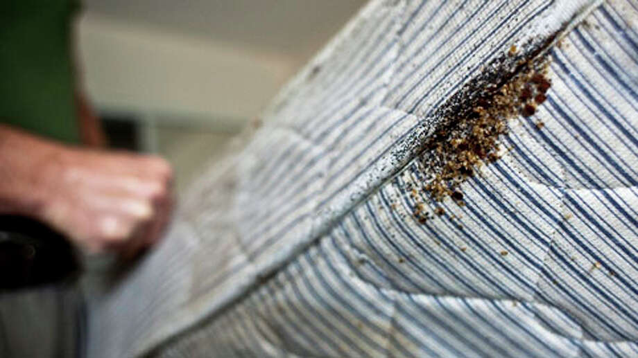 Bedbugs infestation can be obvious, as seen in a mattress at a motel in Houston discovered in December 2009.Scroll through to learn more about these pests. Photo: Eric Kayne, . / Freelance