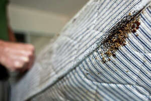 Bedbugs infestation can be obvious, as seen in a mattress at a motel in Houston discovered in December 2009.    Scroll through to learn more about these pests.