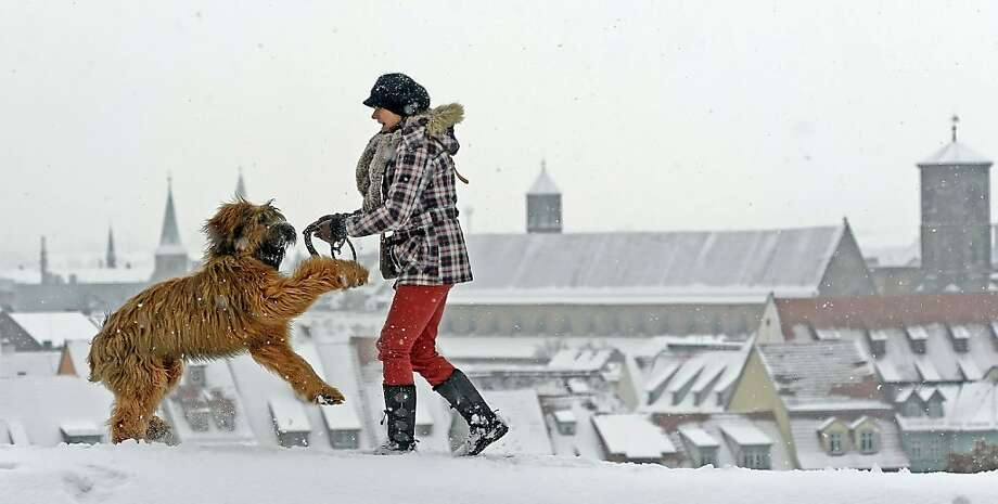 Big, hairy puppy: Sabine Conrad romps in the snow with her French sheepdog, El Lobo, in Erfurt, Germany. Photo: Jens Meyer, Associated Press