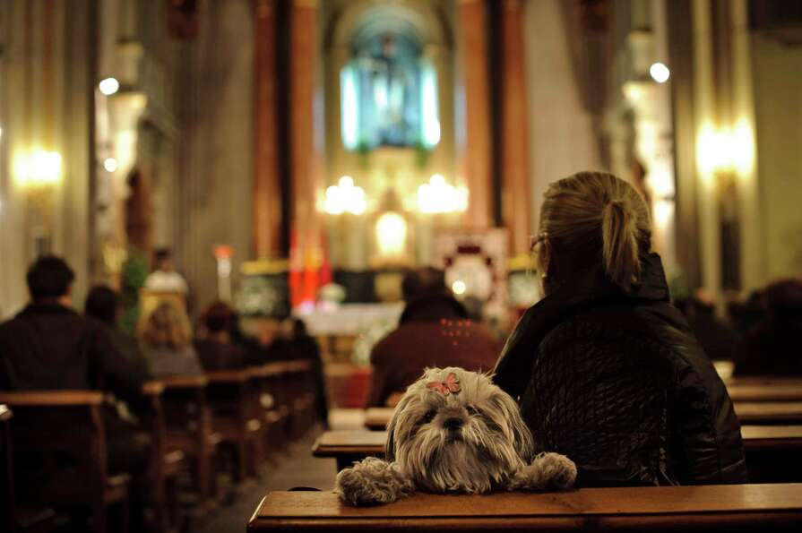 A dog looks over the back of a pew as people take part in a mass at San Anton Church in Madrid, Thur
