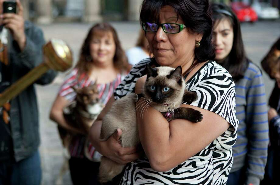 A woman have her cat blessed by a Catholic priest during the Day of Saint Anthony of Abad in Mexico City, Thursday, Jan. 17, 2013. The yearly ceremony to ensure the health of their livestock and pets by having them sprinkled with holy water and sanctified is known as the Benediction of Beasts. Photo: Eduardo Verdugo, Associated Press / AP