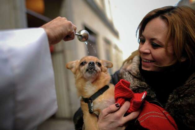 A dog is blessed by a priest at San Anton church in Madrid on Saint Anthony's Day, on January 17, 2013. Dogs, cats, rabbits and even turtles, many dressed in their finest, trooped into churches across Spain in search of blessing on Saint Anthony's Day, the patron saint of animals. Photo: PEDRO ARMESTRE, AFP/Getty Images / AFP ImageForum