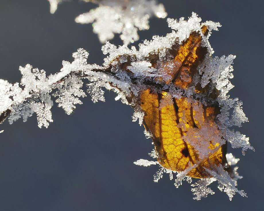Frost forms on a leaf in Boise, Idaho, Thursday Jan. 17, 2013. Photo: Darin Oswald, Associated Press