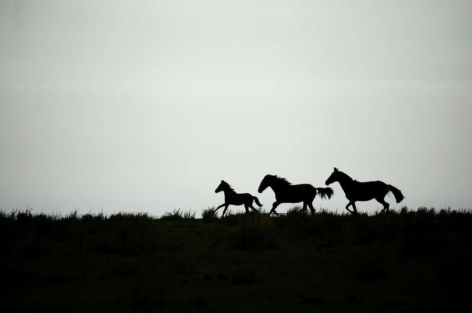 Horses run during the Stage 9 of the Dakar 2013 between Tucuman and Cordoba, Argentina, on January 14, 2013. The rally takes place in Peru, Argentina and Chile between January 5 and 20. Photo: FRANCK FIFE, AFP/Getty Images / 2013 AFP