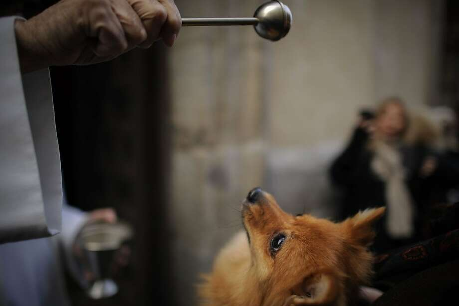 Play fetch? A Pom(?) being blessed at San Anton Church in Madrid is probably hoping the priest is going to throw the aspergillum. Photo: Pedro Armestre, AFP/Getty Images