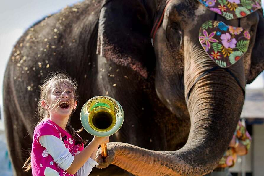 Dylan Belanger, 8, of Royal Palm Beach, holds onto a horn as Cora, a 51-year-old Indian elephant, bl