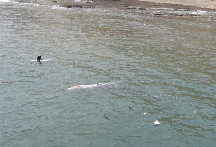 What a shock: Whale surfaces right next to surfer off Point Arena