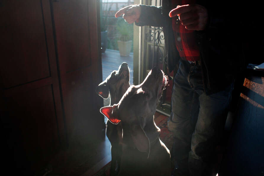 Cal Meeder commands attention from his weimaraners, Clyde and Luke at his home in San Francisco. Cly