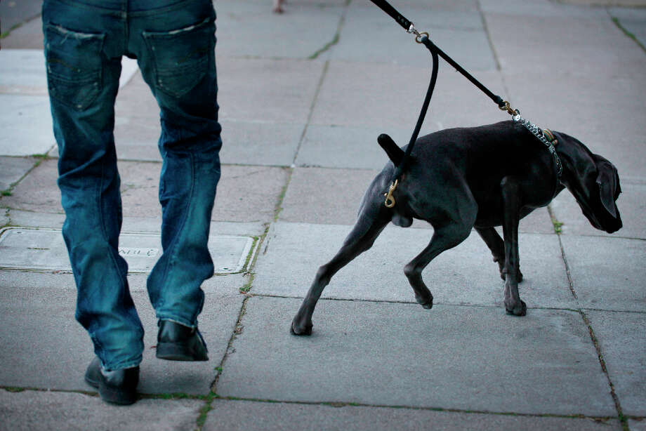 On the night before a scheduled surgery to implant testicle implants for his dog, Cal Meeder takes his 1-year-old weimaraner, Luke, to San Francisco's Dolores Park. Photo: Mike Kepka, The Chronicle / ONLINE_YES