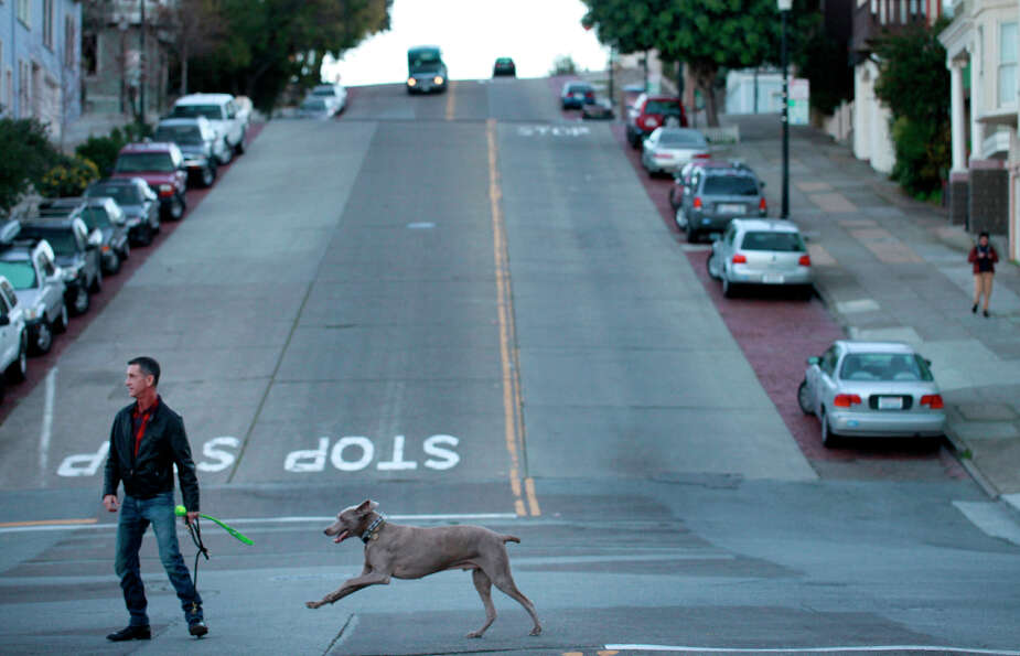 Cal Meeder leads his  weimaraner, Clyde, who received a pair of Neuticles 9 years ago, to San Franci