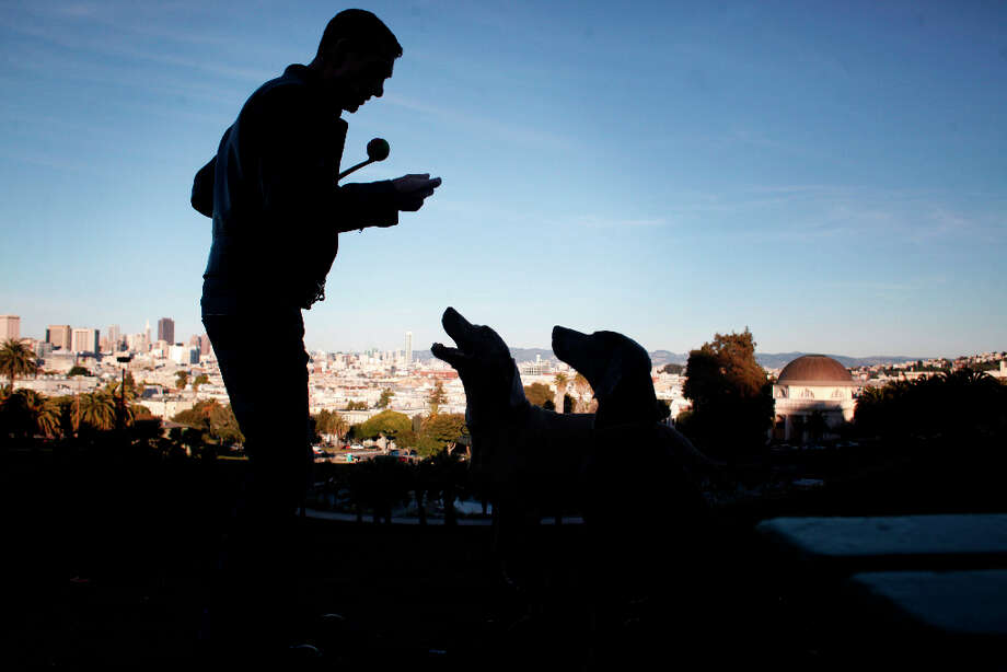 Cal Meeder commands attention from his weimaraners, Clyde and Luke in San Francisco's Dolores Park. Clyde received testicle implants called Neuticles 9 years ago and Luke was set to get his soon. Photo: Mike Kepka, The Chronicle / ONLINE_YES