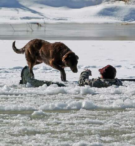 A hunter gestures his dog away today as he waits in the Colorado River for rescue on Tuesday in Mesa County, Colo. The man fell in while retrieving a goose he shot. Grand Junction Fire Department and Lower Valley Fire Department responded to the scene to rescue the man, who reportedly had been in the water for nearly 30 minutes. (AP Photo/The Grand Junction Daily Sentinel, Dean Humphrey) Photo: AP