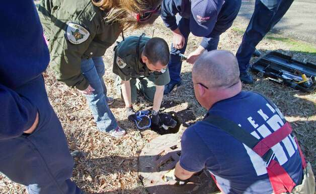 With the help of the Texarkana, Texas Fire Department, Texarkana Animal Control Officer Rocky Childress pulls a dog from a sewer drainage pipe on Smith Street Friday afternoon. Officers were notified of the dog by residents across the street. They were unsure of how the dog got into the sewer but with the help of a tag on the dog's collar, the owner, who lives in Fouke, Ark., was notified. Photo: AP