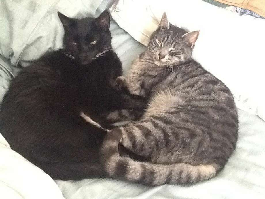 These two cats get along very well. The back one, Pest is about 19 yrs old. He is still going strong. The grey we call kitten because we could not agree on anything else. Kitten is close to 3 years old and is the most talkative cat I have ever known.(Joyce Morier)