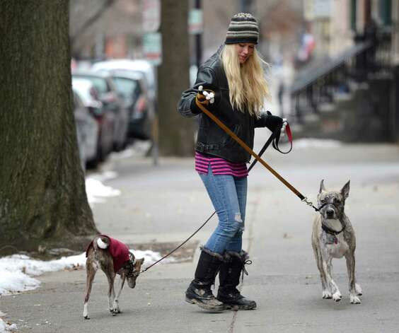 Kerri Kluetzman has her hands full as she walks her dogs, Lucy, left, and Fledermaus on State Street Jan. 21, 2013 in Albany, N.Y.      (Skip Dickstein/Times Union) Photo: SKIP DICKSTEIN / 00020841A