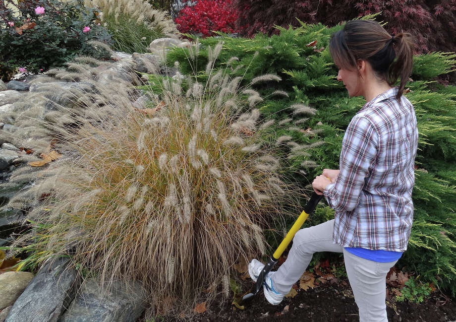 A woman digs out some ornamental grass with a Spear Head Spade. Photo: Contributed Photo