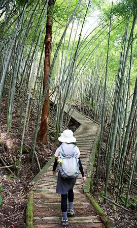 A hiker strolls through a bamboo grove on the Nakasendo trail